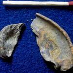 zwei Exemplare in Schalenerhaltung; evtl. zur Untergattung <i>Ceratostreon</i>)