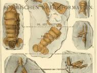 Fritschs Krebspublikation
