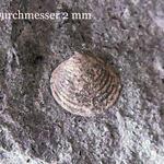 Vorkommen in der sächsischen Kreide waren bisher nicht bekannt