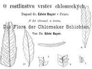 E. Bayer, 1896: Blätterabdrücke aus den jüngsten Schichten der böhmischen Kreide