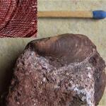 mit Detailansicht der Schalenstruktur