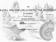 G. Bruder über die Jurafossilien aus Sachsen vom Fundpunkt an der Lausitzer Überschiebung bei Hohnstein, Sächsische Schweiz