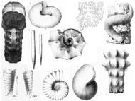 Galerie: Kopffüsser