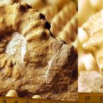die Brießnitz-Formation umfasst Sedimente des Unterturon, sowie das untere Mittelturon