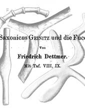 F. Dettmer über vermeintliche Parallelen von Spongites saxonicus zu rezenten Foraminiferen und Würmern