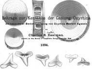 C.R. Eastman: Dissertation über die fossilien Reste der Hai-Gattung Oxyrhina