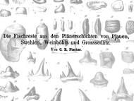 C.E. Fischer über fossile Fische