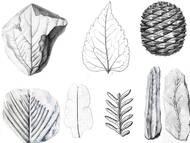 Flora der sächsisch-böhmischen Kreideformation