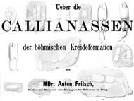 A. Fritsch über Geistergarnelen