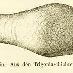 Abbildung aus Fritsch, 1883. Iserschichten