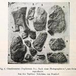 verschiedene Reste (Schulterblatt, Rippen, Oberschenkel, Halswirbel, ...)