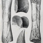 Wirbelkörper, Zahnkrone, Unterschenkelknochen