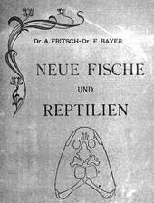Fritsch & Bayer, 1905