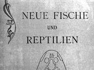 Fritsch & Bayer, 1905