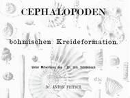 Fritsch & Schlönbach, 1872: Über die kretazischen Kopffüsser