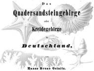 H.B. Geinitz über die Fossilien der Oberkreide von Sachsen und Böhmen