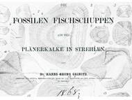 Geinitz, 1868: Fischschuppen aus dem Turon von Dresden-Strehlen