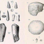 Zahn- und Knochenfragmente