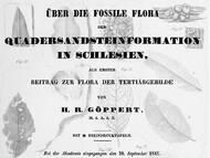H. R. Göppert über echte und vermeintliche Pflanzenfossilien der oberen Kreide im ehemaligen Niederschlesien