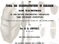 H. R. Göppert über tatsächliche und vermeintliche Pflanzenfossilien aus der Kreide