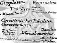 Bezeichnungen für (Pseudo-) Fossilien aus dem 18. Jahrhundert