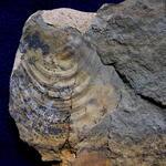 Neben den dominanten Schwämmen zählten Muscheln eher zu den Raritäten an diesem Fundort