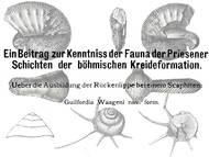 J. Jahn, 1892: Zwei Beiträge zur Fauna der Brezno-Formation