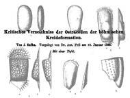 J. Kafka: Verzeichnis der bekannten Ostracoden-Arten Ende des 19. Jahrhunderts