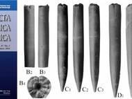 M. Kostak & F. Wiese über neue Funde von Praeactinocamax aus dem oberen Turon der böhmischen Kreide