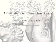 Laube & Bruder über die fossilen Cephalopoden der oberen Kreide von Tscheschien