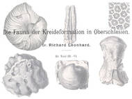 R. Leonhard über die Fossilien der Kreide in Schlesien