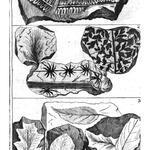 Phytolithen, Bibliolithen