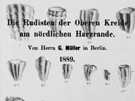G. Müller: Rudisten aus der Kreide