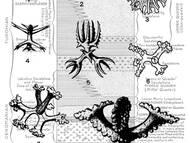 A. Schrammens Sammlung von Kieselschwämnmen aus der Kreide