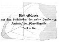 Ernst von Otto: Blattabdruck von Paulsdorf