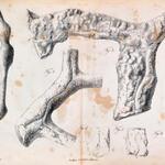 Abbildung aus Otto, 1852. Taf. VI, Fig. 2, 3