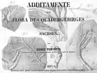 E. von Ottos zweiter Beitrag zur sächsischen Kreideflora