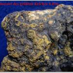 Material von diesem Fundort wurde bisher unter der Gattung <i>Pachycaenia</i> geführt