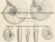 Ein Standardwerk zu den sächsischen Ammoniten