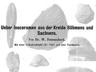 Erstbeschreibung turoner Inoceramen des sächsisch-böhmischen Kreidebeckens