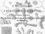 Ph. Pocta: Bryozoen vom Gangberg (Kaňk) in Kuttenberg (Kutna Hora)