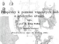 F. Pocta über Kalkschwämme