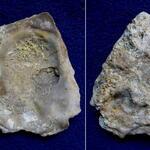 (siehe Ostrea hippopodium in Wanderer); rechte Schale, Innen- und Außenseite, typisch für diese Art ist der dreieckige, gestreifte Bereich (linkes Bild, oben)