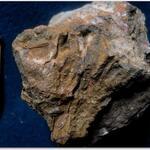 bei dem linken Exemplar ist ein Stück der Außenschale der rechten Klappe abgebrochen, darunter schaut vermutlich die noch vorhandene Deckelklappe hervor