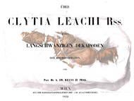A.E. Reuss über Enoploclytia leachi aus Sachsen, Böhmen und England