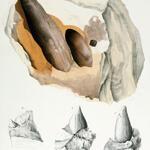 Fragmentäre Hohlabdrücke & innere Steinkerne