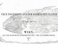 Reuss: Fische aus dem böhmischen Pläner