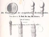 A.E. Reuss über kretazische Foraminiferen