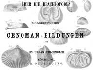 U. Schlönbach: Über Brachiopoden aus dem Cenoman