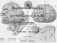 Schlüter: Echiniden der norddeutschen Kreide Teil II